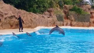 Dolphins in Tenerif