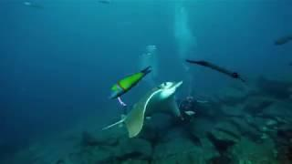Royal Hideaway Corales Resort Campaign - Diving Master